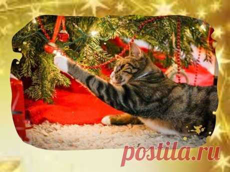 Как уберечь новогоднюю ёлку от нападений кошки. Всё гениально - просто!