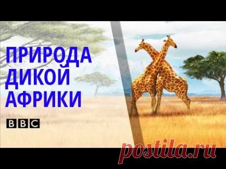 ✪ Поразительный Документальный фильм BBC о природе и животных дикой Африки [BBC на русском]