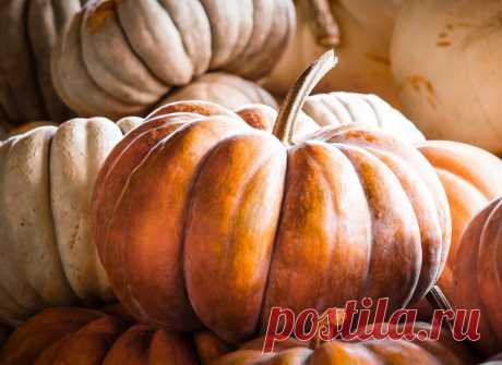 10 причин кушать тыкву каждый день - tochka.net