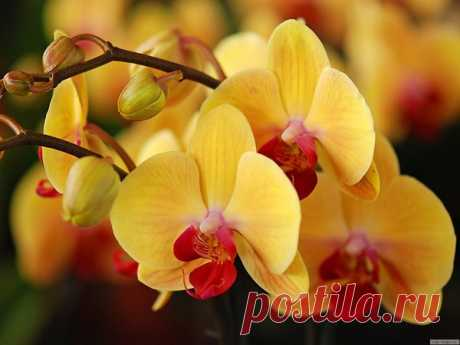 Оживляем уцененные Орхидеи   Волшебство на подоконнике   Яндекс Дзен