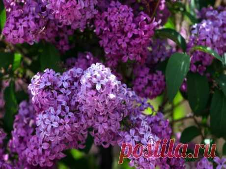 Для дачи в цвету с весны до осени