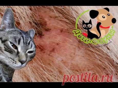 Зуд у собаки/кошки. Блошиный дерматит. Аллергия у собак на блох, что делать?