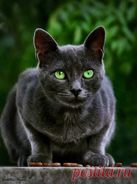 Разносчицы удачи - 45 фотографий загадочных чёрных кошек