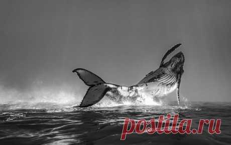 27 редких морских фото, где фотограф поймал удивительный момент   Российское фото   Яндекс Дзен