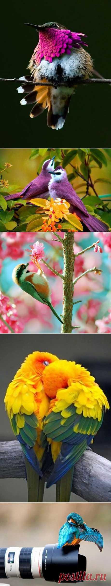 Фото подборочка ярких птичек.