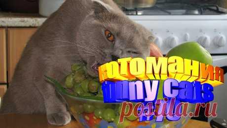 смешные коты видео, видео котов смешные, смешной кот видео, кот смешное видео, видео с котами, для котов видео, коты воители видео, для кота видео, видео кота, видео животные смешные, смешные видео животных, видео смешное животные, про смешных животных, про животных смешных, приколы с котами, прикол котов, прикол коты, кошки видео смешное, кошки видео смешные, смешное про кошек, смешное видео кошек, про кошек смешных, смешное видео кошка, смешно кошка, смешное о кошках, кошек смешные