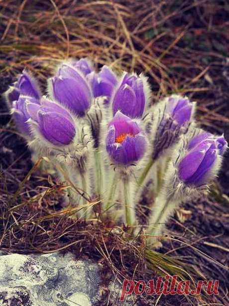 Дышать воздухом марта это всё равно, что вдыхать аромат надежды. Зима осталась позади, впереди - весна! Понимаешь, целая Весна! Такая хрупкая, но такая упрямая; такая нежная, но такая сильная. Весна с её ручьями и капелями, дождями и радугами, ожиданиями и событиями, мечтами и целями, новыми поворотами. Теперь каждое утро ты просыпаешься и понимаешь - за окном Весна! А, значит, тебе всё по силам.