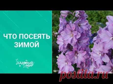 Что посеять зимой в декабре-январе/ Семена цветов: бегония, эустома, глоксиния