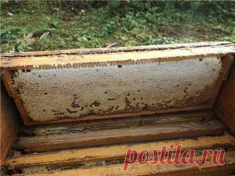 ошибки пчеловода - сборка гнезда на зиму у пчел