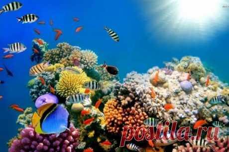 Планета, которую мы теряем: коралловые рифы могут исчезнуть к 2100 году Моря и океаны уже не могут обеспечить животным и растениям идеальные условия для жизни и роста. Это связано с тем, что воды Мирового океана стремительно загрязняются пластиковыми отходами, нагреваются...