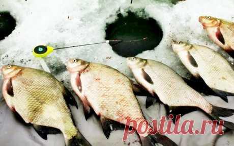 """Интересный способ зимней ловли - """"Дергуша"""": наловил лещей на месяц вперед   Страсти по рыбалке   Яндекс Дзен"""