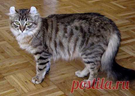 Самые красивые кошки в мире.