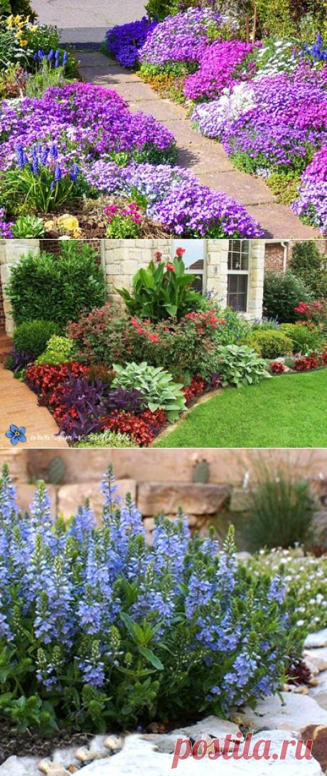Цветы для клумбы цветущие все лето низкорослые | Красивый Дом и Сад