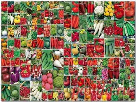 LOS PLAZOS DE LA SIEMBRA DE LAS SEMILLAS A LAS PLANTAS \u000d\u000a\u000d\u000a¡Conserven a él para no olvidar!\u000d\u000a\u000d\u000aEl tomate. \u000d\u000aLa plantación de las semillas — el medio — el fin del marzo \u000d\u000aEl desembarco en el terreno abierto a la edad de 55-70 días \u000d\u000a(Cuando pasa la amenaza de las heladas) \u000d\u000aEn existencia del invernadero o el invernadero las semillas sientan antes, crían con la iluminación \u000d\u000a\u000d\u000aLa berenjena. \u000d\u000aLa siembra de las semillas — el medio del marzo \u000d\u000aLa altercación en la fase de dos hojas presentes \u000d\u000aEl desembarco en el terreno a la edad de 60-70 días a finales del mayo \u000d\u000aCuando pasa la amenaza de las heladas. \u000d\u000aEn el tiempo frío (más abajo a 15 granizo...