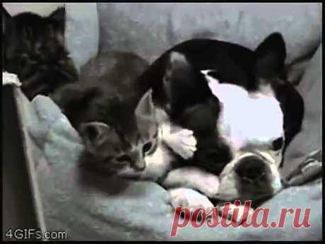 ▶ Лучшие приколы с животными! 2013 - YouTube