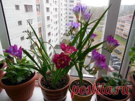 Растение с изящными бутонами, которое наполнит ваш дом ароматом лета | Все о домашних цветах | Яндекс Дзен
