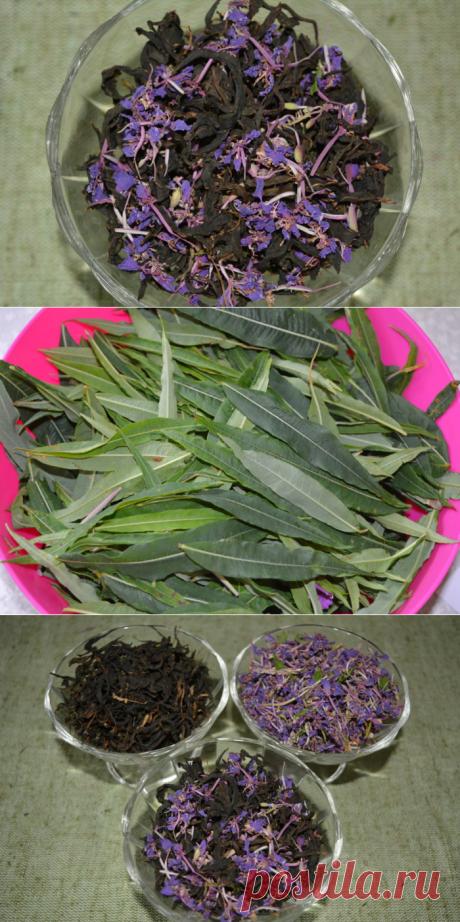 Копорский чай из листьев Иван-чая - как сделать Копорский чай без мясорубки, пошаговый рецепт с фото