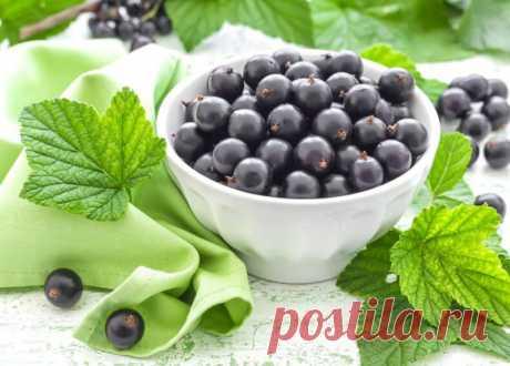 Как сделать правильное удобрение для сладкой смородины? | 6 соток