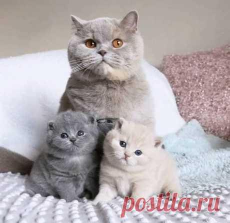 Мама с дочкой и сыночком