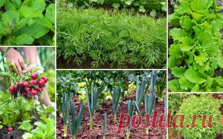 Что можно посеять и посадить в огороде в апреле | Все о грядках (Огород.ru)