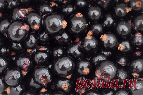 Как получить 8-10 кг черной смородины с куста. Уход | Дачная жизнь | Яндекс Дзен