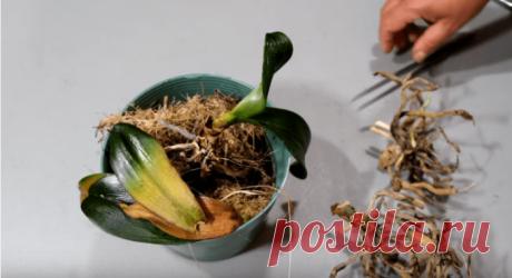 Не выбрасывайте пеньки орхидей
