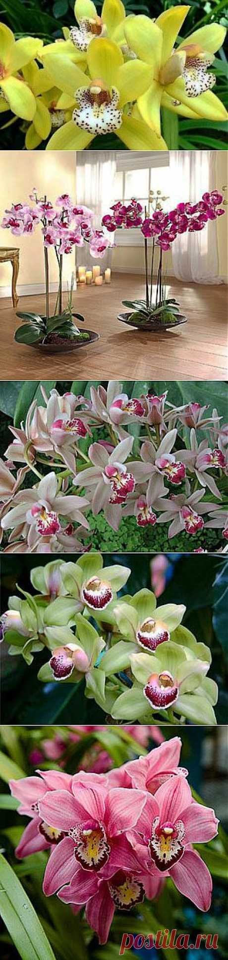 Orchid: leaving in house conditions - Houseplants, leaving, the encyclopedia of plants, house flowers, a photo, names