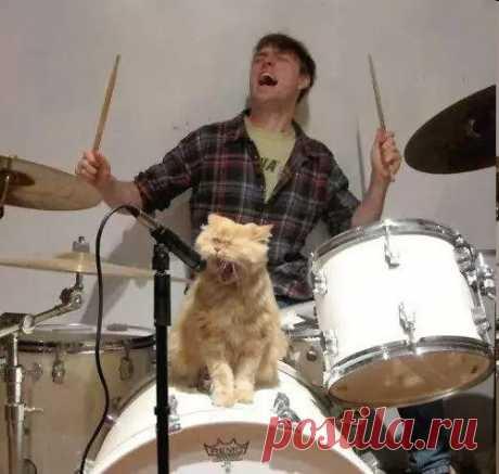Кошки - 211 photos. !Писатель Александр Романов's photos.