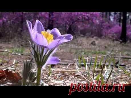 ▶ гр, Самоцветы Багульник - (из майловского карантина)