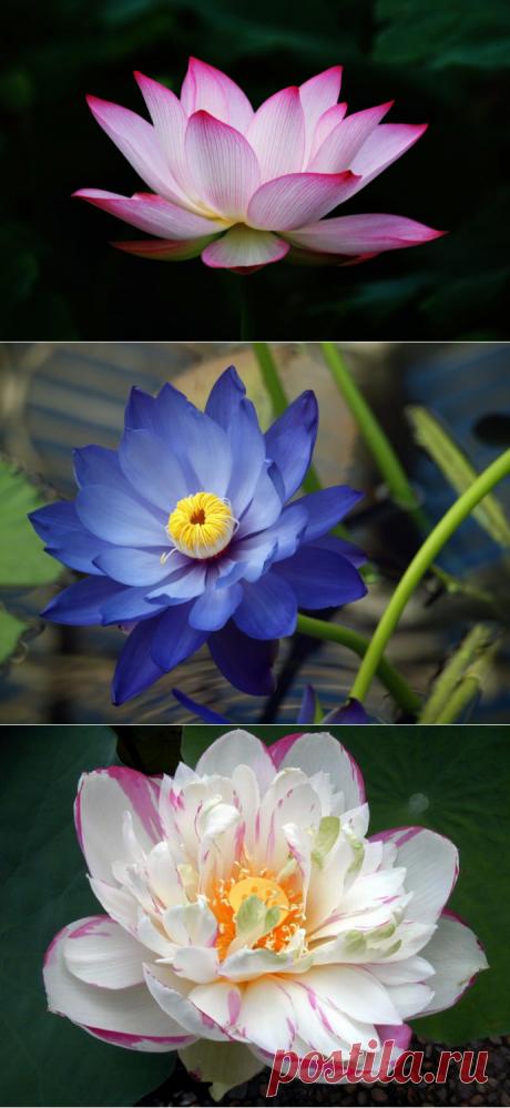 Самые древние цветы на земле