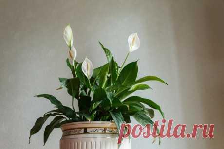 Сильная энергетика: растения, приносящие здоровье, богатство и счастье в дом