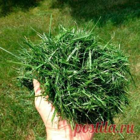 Что можно делать из скошенной травы, кроме как удобрения для огорода?