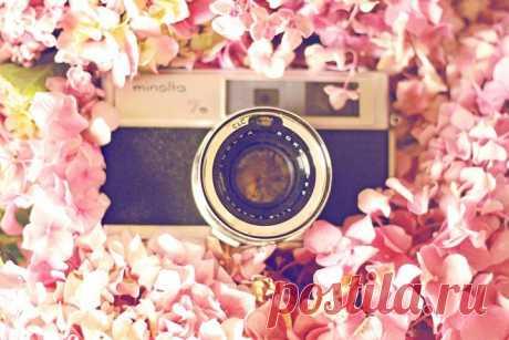 Как выбрать свадебного фотографа? - WeddyWood