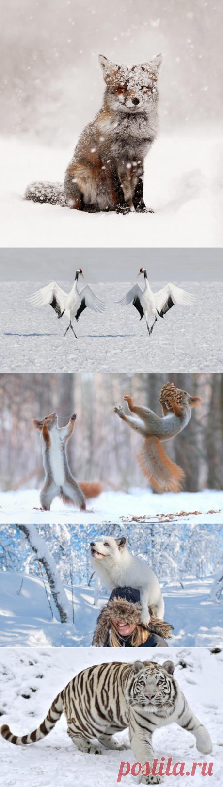 Заряд отличного настроения;)) Самые «снежные» животные;)) — Фотоискусство