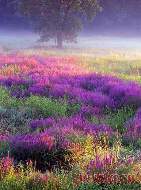Вдыхай запах, ощущай прикосновение, чувствуй порыв ветра и солнечные лучи.