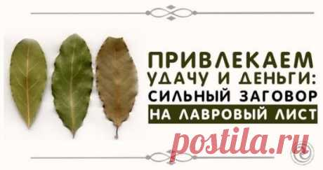 ПРИВЛЕКАЕМ УДАЧУ И ДЕНЬГИ:  СИЛЬНЫЙ ЗАГОВОР НА ЛАВРОВЫЙ ЛИСТ Лавр считается растением, обладающим магическими свойствами. Его силу используют для привлечения здоровья, удачи и денежного благополучия. Многие растения обладают удивительной силой. Лавр не является исключением. В древности с помощью его листьев привлекали удачу. Сейчас Лавр используют для улучшения вкусовых качеств блюд, не подозревая, какая сила таится в этом невзрачном на первый взгляд растении. Каждый человек может привлечь