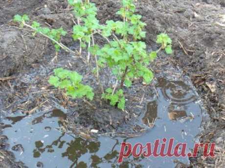 Чем подкормить ягодные кустарники осенью