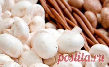 Как и сколько хранить шампиньоны правильно | Храним свежие грибы шампиньоны в холодильнике и морозилке