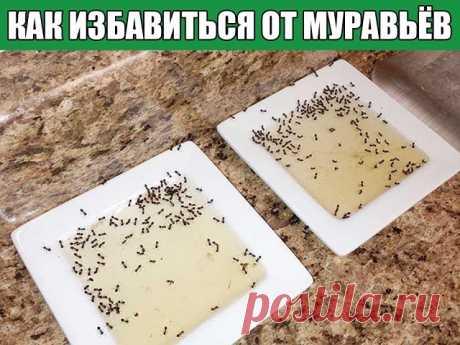 КАК ИЗБАВИТЬСЯ ОТ МУРАВЬЁВ НА САДОВОМ УЧАСТКЕ 10 народных советов, которые стоит попробовать, если вам досаждают эти в общем-то полезные, но на даче нежелательные насекомые Чем опасны муравьи на даче, знает, пожалуй, каждый садовод. Мало того, что эти прилежные пастухи разводят и заботятся о тле, портящей растения, так еще и поливая своей муравьиной кислотой корни растений, способны погубить их. Способов борьбы с ними изобретено уже масса. От химических инсцекитицидов (нап...