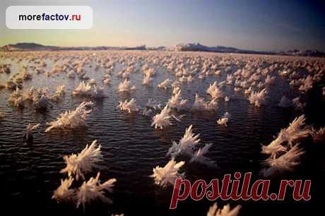Ледяные цветы Арктики – редкий природный феномен - Море Фактов