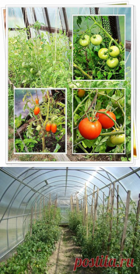 Hotbed for tomatoes the hands: requirements to a design, ways of production, tools and materials, preparatory work, stages of installation, video