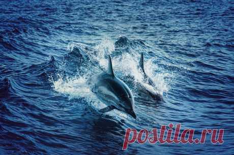 Дельфины – удивительные существа, способные звать друг друга по имени. У каждого дельфина в океане есть свое имя, и они на него откликаются, когда их зовут сородичи.