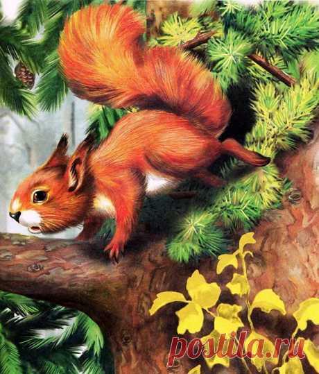 Лесные домишки - Страница 3 - Виталий Бианки