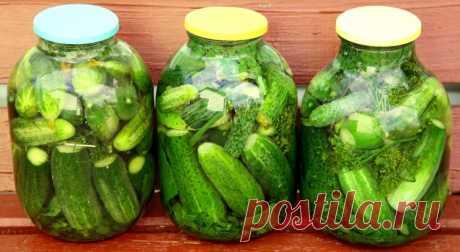 Как засолить огурцы, чтобы были вкусными, крепкими и хрустящими? | Еда и кулинария