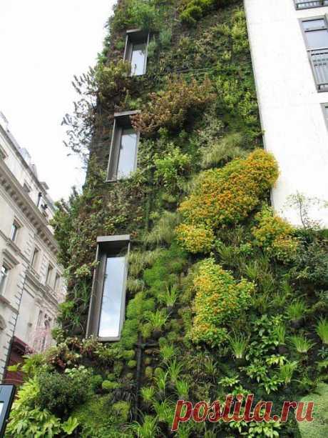 Красота  и  великолепие  вертикальных  садов.