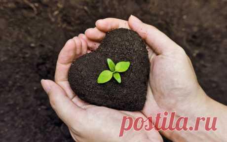 Обеззараживаем почву для растений