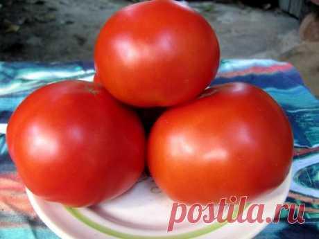 Томатные хитрости Если при посадке рассады в каждую лунку положить горсть ржаных сухарей (перемолотых) и немного древесной золы, то томаты буду сильные, крупные, урожайные. За 2-3 дня до высадки в грунт рассады томатов у рассады срезают нижние 2-3 листочка. Первые примерно 2 недели после высадки в грунт желательно не поливать - при этом корневая система будет развиваться в грунт и растения будут меньше страдать от засушливых периодов. Оптимальное время для удаления пасынков у томата, когда о