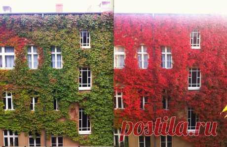 Художница-осень и ее удивительные пейзажи