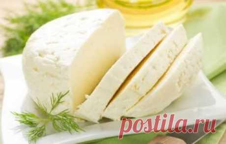 Как сделать брынзу в домашних условиях. Из 2 литров молока получим 1 кг сыра – reallife