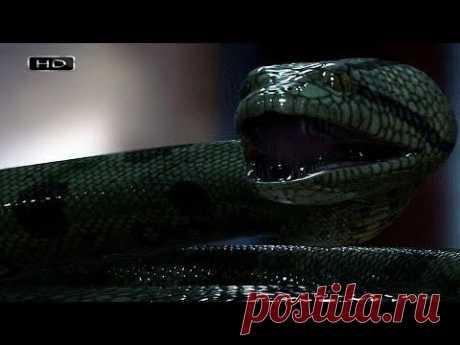 Самая большая змея планеты, которая убивает не ядом, а грубой силой - Анаконда